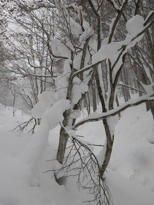 2011.02.01buna.jpg