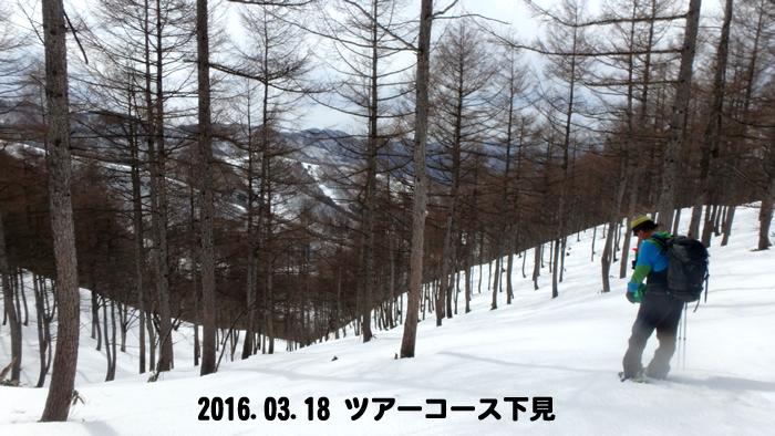 20160318ss shitami.jpg